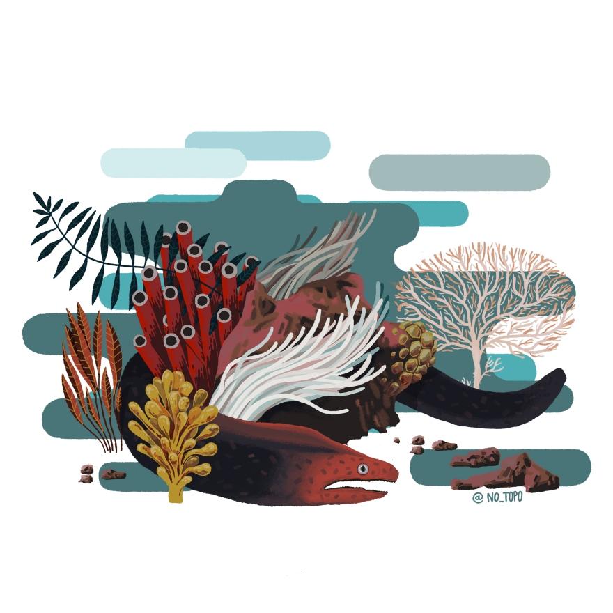 fondo marino4